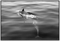 http://www.ed-templeton.com/files/gimgs/th-150_Dolphins-Catalina-water-pattern.jpg
