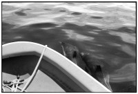 http://www.ed-templeton.com/files/gimgs/th-150_Dolphins-from-boat-Catalina.jpg